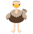 fat ostrich on white background vector image