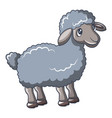 grey sheep icon cartoon style vector image