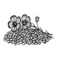 hand drawn flax flowers and seeds hand drawn vector image vector image