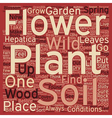 WILD FLOWER GARDEN text background wordcloud vector image vector image