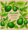 avocado branches frame on color background vector image vector image