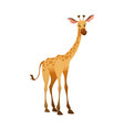 jungle wild giraffe colorful beautiful safari or vector image vector image