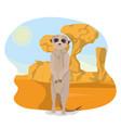 meerkat in the desert vector image