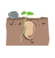 seed growth vector image vector image