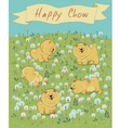 Happy pets chow-chow on the blossoming field vector image vector image