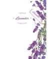 Lavender flowers banner vector image vector image