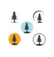 pines tree design vector image vector image
