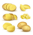realistic potatoes grocery natural products vector image