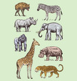 set of african animals rhinoceros elephant vector image