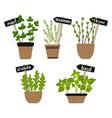 set of herbs in pots green growing vector image vector image
