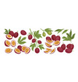 set realistic ripe tropical fruits half and vector image