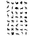 world of animal vector image vector image