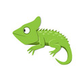 green lizard watching something in flat style vector image