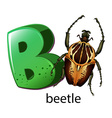 A letter B for beetle vector image vector image