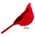 cardinal bird isolated object vector image vector image