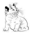 fluffy kitten vector image vector image