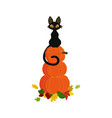 pumpkin with black cat vector image