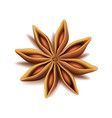 realistic top view dry star anise fruit vector image vector image