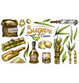 cane sugar with leaves set of sugarcane plants vector image vector image