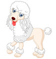 cute poodle dog vector image
