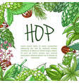 hop plant frame banner with copy space vector image vector image