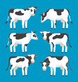 set cute black and white spotted cows isolated vector image