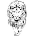 big lion with mane is painted with ink hand vector image vector image