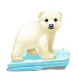 cute polar bear floats on a drifting ice floe vector image