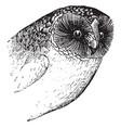 owl beak vintage