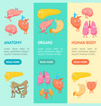 cartoon internal organs funny emotions banner vector image vector image