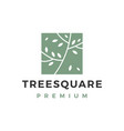 tree square logo icon vector image