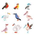 collection of beautiful birds crane stork swan vector image vector image