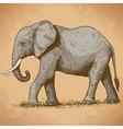 engraving elephant retro vector image vector image
