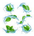 fresh water mint liquid splashes with green vector image vector image
