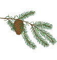 green fir branch with pine cone vector image vector image