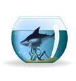 big dangerous looking shark in a small aquarium vector image vector image