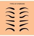 Eyebrows Set Flat vector image vector image