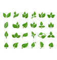 green leaves logo plant nature eco garden vector image