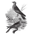 turtle doves vintage vector image
