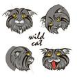 wild cats vector image vector image