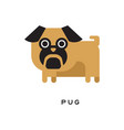 cartoon brown pug puppy with short-muzzled face vector image vector image