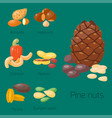 piles of different nuts hazelnut almond peanut vector image vector image
