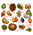 isolated exotic fruits sketch vector image vector image