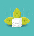 stevia natural sweetener with leaves vector image vector image