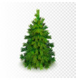stock realistic christmas tree vector image vector image