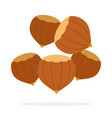 hazelnuts flat isolated vector image vector image