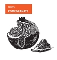 Pemagranate vector image vector image