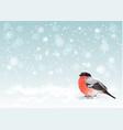 Christmas bullfinch background vector image vector image