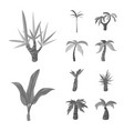 isolated object jungle and botanical icon vector image vector image