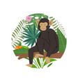 monkey marmoset on tropical tree with palm vector image